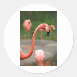 Flamenco rosado etiqueta redonda