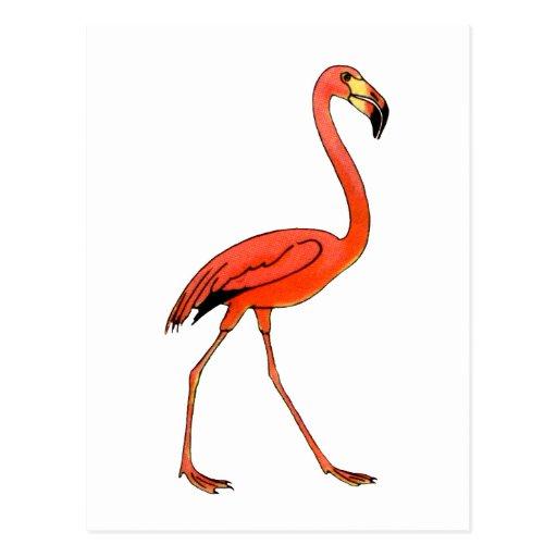 Flamenco rosado postal