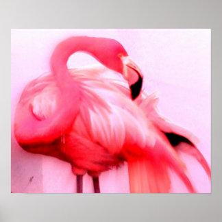 Flamenco rosado póster
