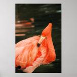Flamenco rosado posters
