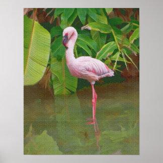 Flamenco rosado que vadea póster