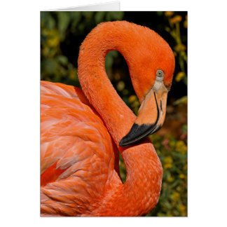 Flamenco rosado tarjeton