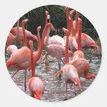 Flamencos de la Florida Etiqueta Redonda