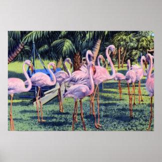 Flamencos de Miami la Florida en el parque de Hial Posters