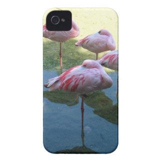 Flamencos el dormir carcasa para iPhone 4 de Case-Mate