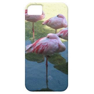 Flamencos el dormir funda para iPhone SE/5/5s