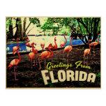 Flamencos rosados de la Florida Postal