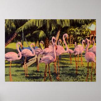 Flamencos rosados en la Florida Póster