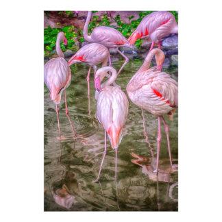 Flamencos rosados fotografías