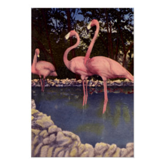 Flamencos rosados, la Florida Póster
