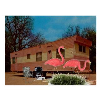 Flamencos rosados postales