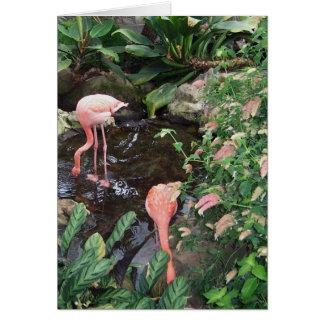 Flamencos rosados tarjeta de felicitación