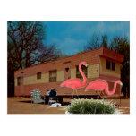 Flamencos rosados tarjeta postal