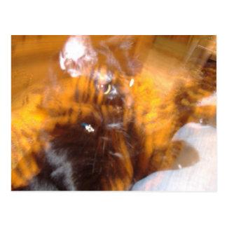 Flaming Black Tiger Postcard