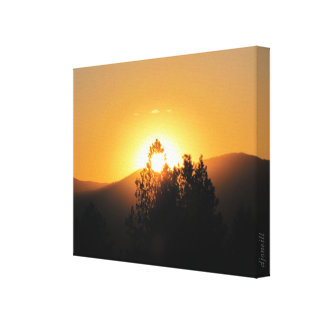 Flaming Fir Tree in the Sunset by djoneill Canvas Print