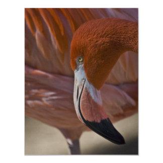 Flaming Flamingo Card
