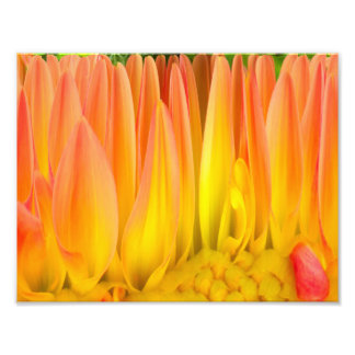 Flaming Flower Abstract Print Photo Print