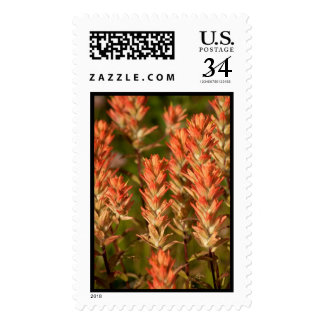 Flaming Flowers Postage