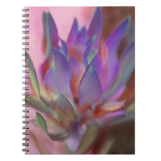 Flaming Protea Notebooks
