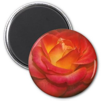 Flaming Rose on Parchment Magnets