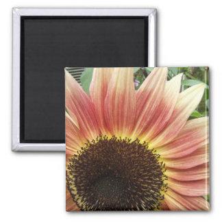 Flaming Sunflower ~ magnet