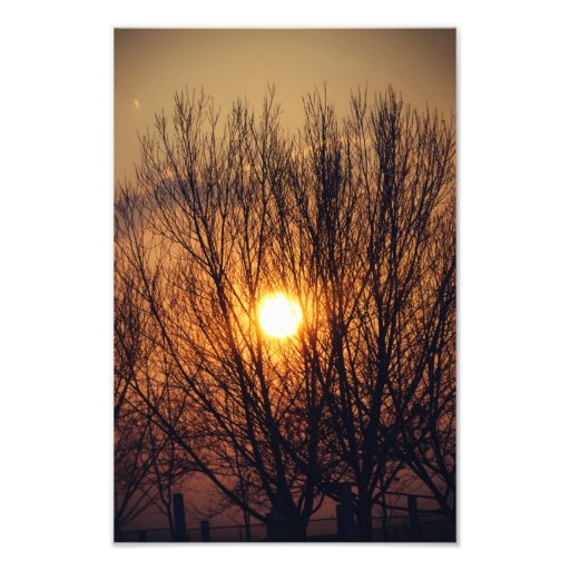 Flaming tree photo print