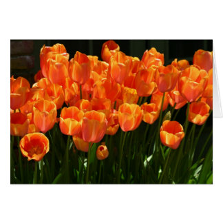 Flaming Tulips Cards