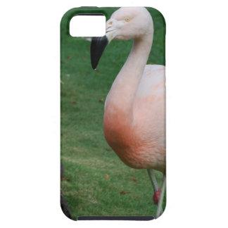 flamingo-103.jpg iPhone 5 cases