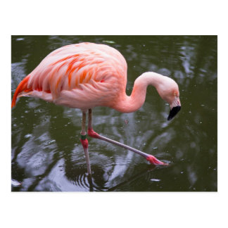 Flamingo #1 postcard
