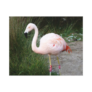 Flamingo #2 canvas print