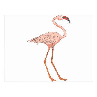 Flamingo #5 postcard