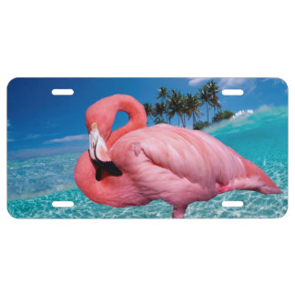 Flamingo and Palms License Plate