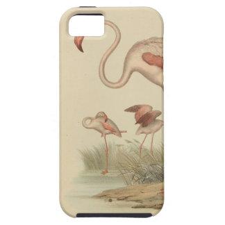 Flamingo bingo iPhone SE/5/5s case