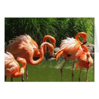 Flamingo Card