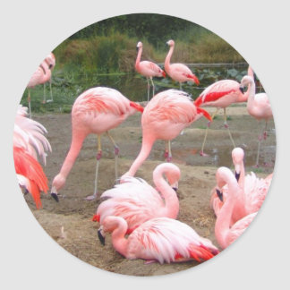 FLAMINGO CITY ROUND STICKERS