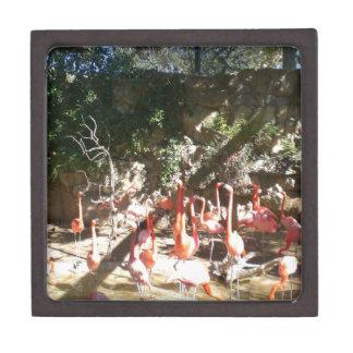 Flamingo Clan Premium Jewelry Boxes