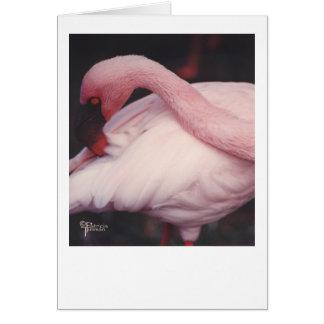 Flamingo close up 1 card