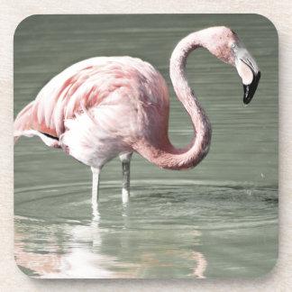 Flamingo Coasters