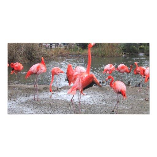flamingo dance photo greeting card