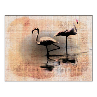 Flamingo Dreams Postcard