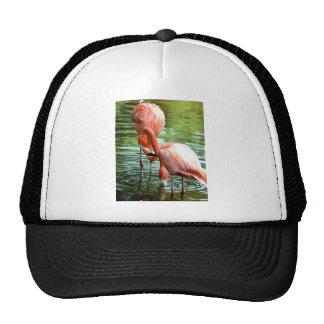 Flamingo Duo Trucker Hat