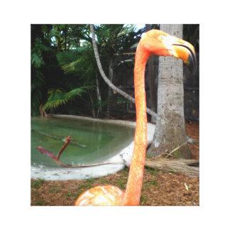 Flamingo Face Canvas Print