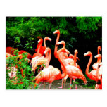 flamingo family love peace joy postcard