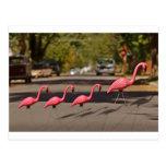 Flamingo Family Post Cards