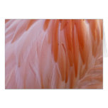 Flamingo Feathers Pink Abstract Nature Card