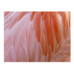 Flamingo Feathers Pink Abstract Nature Postcard