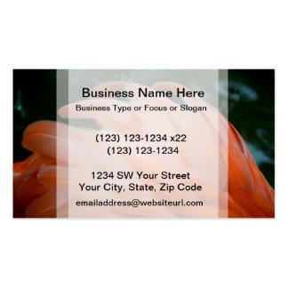 flamingo feathers ruffled closeup bird business card