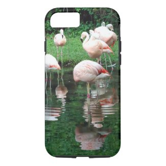 Flamingo Flamboyance