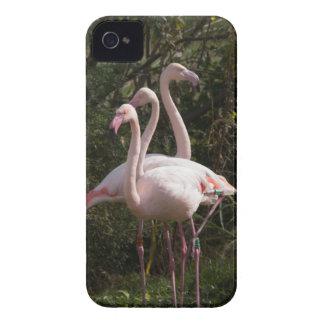 Flamingo Flock iPhone 4 Cover
