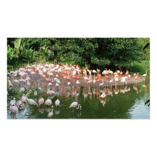 flamingo flock nature business card business cards